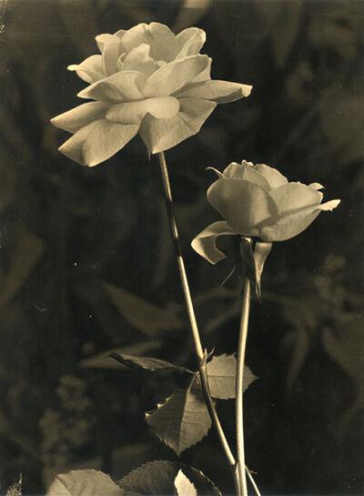 Pierre Auradon, 'Roses', 1930s / 1930s