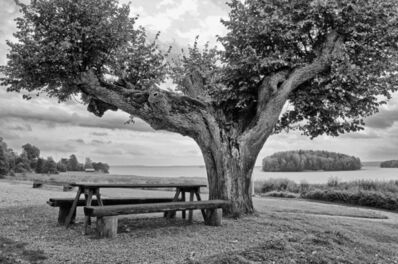 Nancy deFlon, 'The Split Tree', 2010