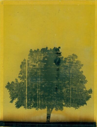 Moris, 'Untitled', 2014