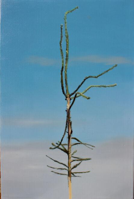 Greet Van Autgaerden, 'Picea abies #9', 2019