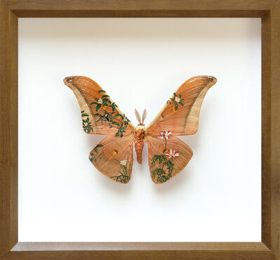 Akihiro Higuchi, 'Collection 0317', 2017