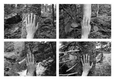 Marlene Creates, '4 excerpts from 'Larch, Spruce, Fir, Birch, Hand, Blast Hole Pond Road, Newfoundland'', 2008