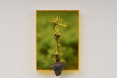 Saskia Noor van Imhoff, 'Untitled', 2020
