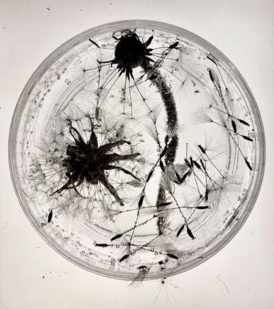 Ringl + Pit, 'Dandelions', 1931