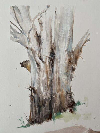 Ondrea Vicklund, 'Mill Valley Eucalyptus', 2020