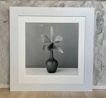 Robert Mapplethorpe, 'Orchid', 1987
