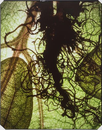 Maggie Foskett, 'Rain Forest', 1996