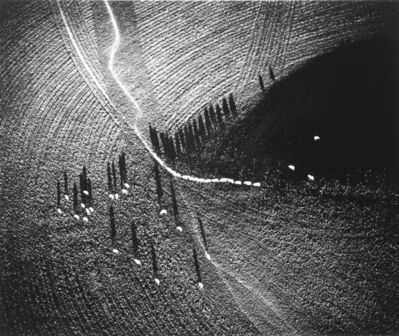 William Garnett, 'Sheep #2, Montezuma Hills, California', 1980