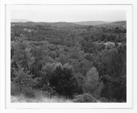 Senta Simond, 'Trees', 2020