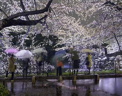 Matthew Pillsbury, 'Hanami #5, Chidorigafuchi,    Thursday April 3rd(TV14605)', 2014