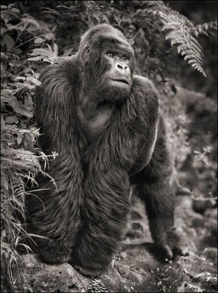 Nick Brandt, 'Gorilla on Rock, Parc des Volcans 2008', 2008