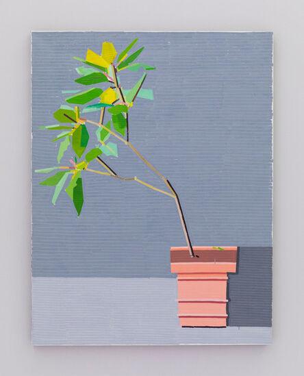 Guy Yanai, 'La Mortella Garden III', 2016