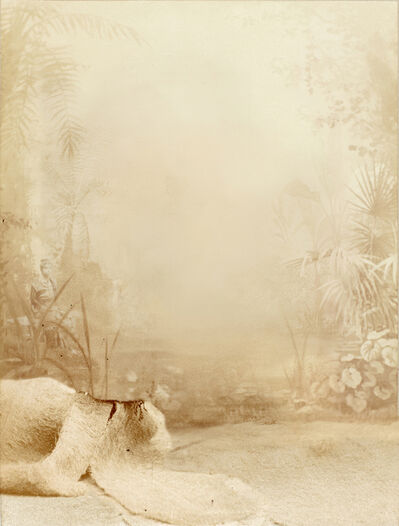 Andrés Pachón, 'Sin título 3', 2013