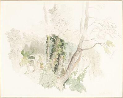 Robert Hills, 'Trees at Beddington', possibly c. 1805