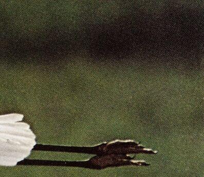 Petra Feriancova, 'Creatures / from Bird Guide', 2013