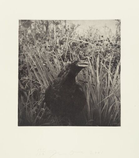 Jim Dine, 'Birds', 2001