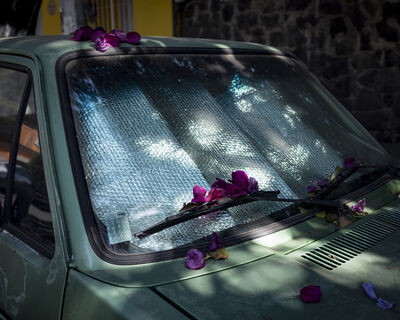 Cig Harvey, 'Bougainvillea on Car', 2020