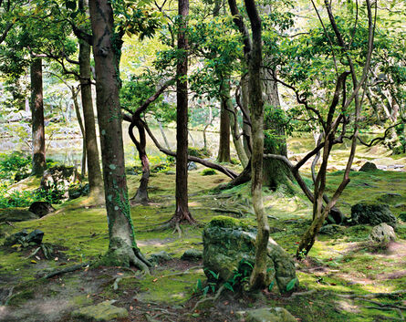 Jacqueline Hassink, 'Saihō-ji 10, summer Southwest Kyoto 30 May 2009 (13:00–15:00)', 2009