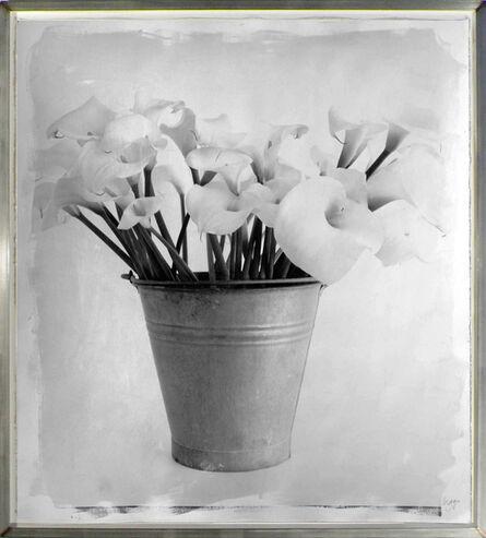 Stephen Inggs, 'Arum Lillies', 2007