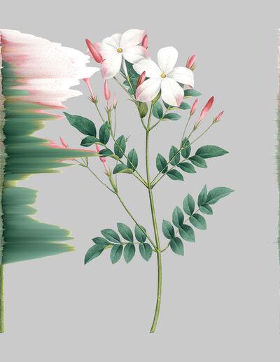Andrea Wolf, 'Jasminum Grandiflorum, var. 051', 2020