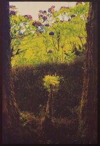 David K Aimone, 'Natural Still Life'
