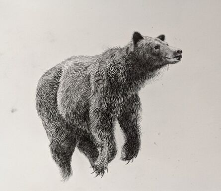 Caitlin Hurd, 'Bear II', 2019