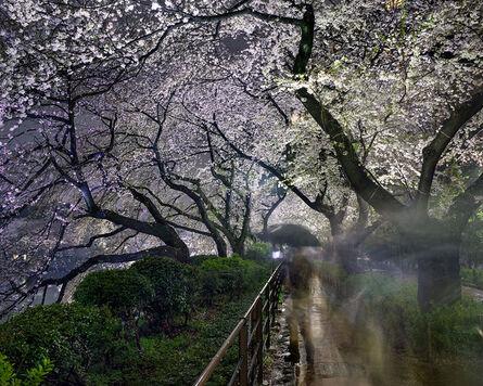 Matthew Pillsbury, 'Hanami #15, Chidorigafuchi, Thursday April 3rd (TV14615)', 2014