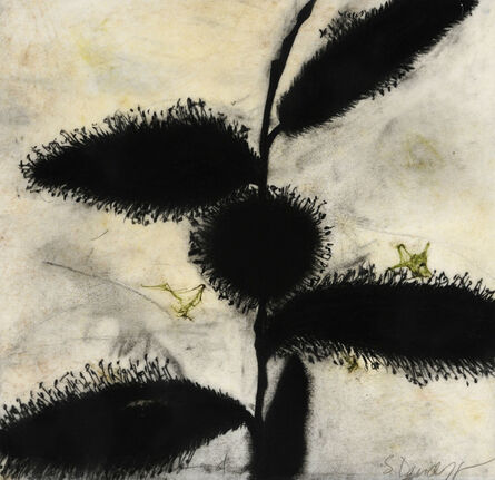 Suzi Davidoff, 'Madera Canyon Cycle - Seeds, Pods 4, 2/2015 ', 2015