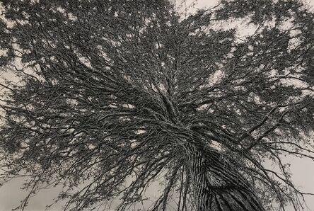 Ellen Wagener, 'Through the Canopy 1', 2018