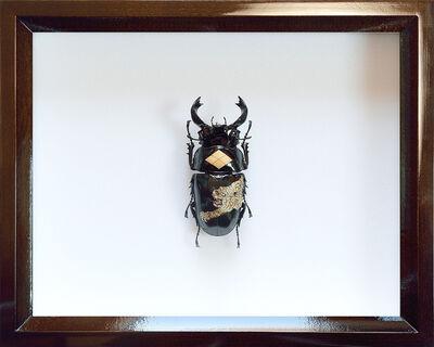 Akihiro Higuchi, 'K0217 Takeda', 2017