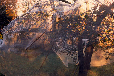 Ralph Wickiser, 'The Covered Apple Tree #11', 1990-1997