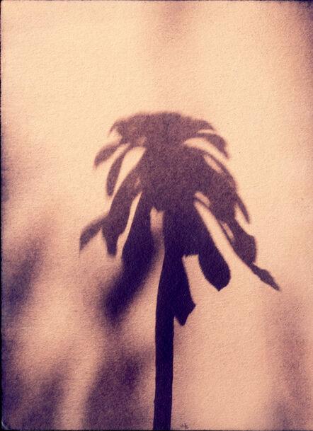 Sayako Sugawara, 'Little Palm IV', 2020