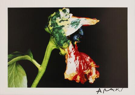 Nobuyoshi Araki, 'Flower', Unknown