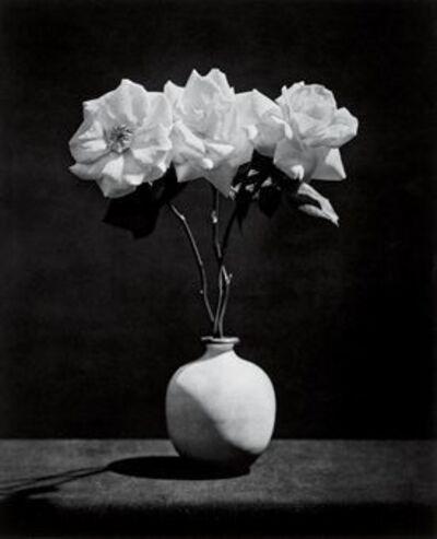 Robert Mapplethorpe, 'ROSE', 1983
