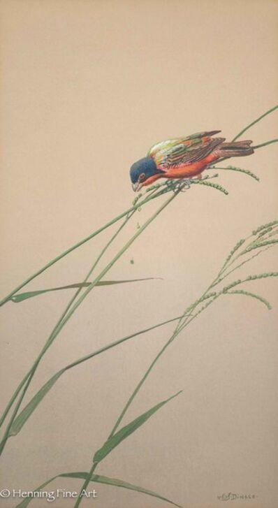 Edward Von Siebold Dingle, 'Painted Bunting Picking Seeds', ca. 1940