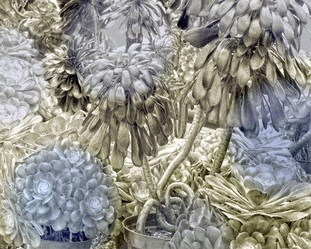 Helen Sear, 'Succulent 2', 2020