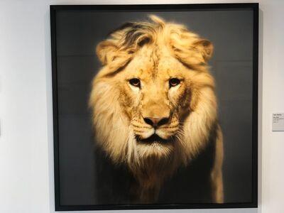 Tyler Shields, 'Lion', 2018