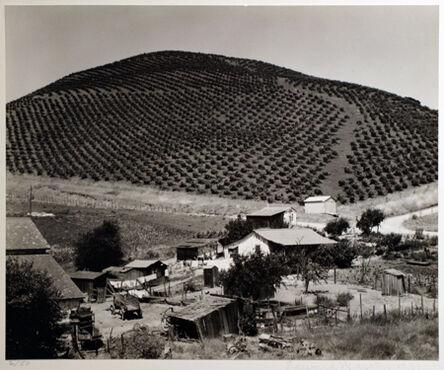 Edward Weston, 'Vineyard-Prunedale Cutoff', 1933