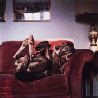 William Wegman, 'On Mrs. Wegman's Couch (From Many Ray:  A Portfolio of 10 Photographs)', 1982