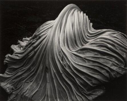 Edward Weston, 'Cabbage Leaf', 1931
