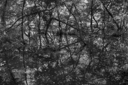Richard Skoonberg, 'The Flooded Forest', 2020