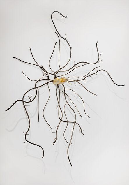 Dalya Luttwak, 'Root of Beech Tree', 2014