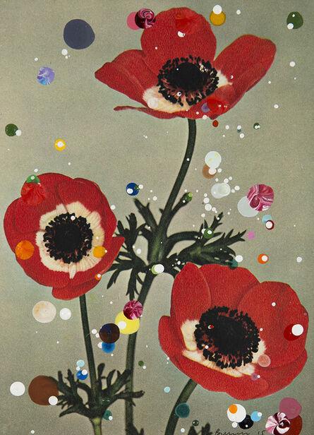Sebastiaan Bremer, 'Anemone Coronaria de Caen Excelsior', 2015