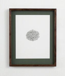 Ann Böttcher, 'Picea abies 'Mariae-Orffae'', 2016