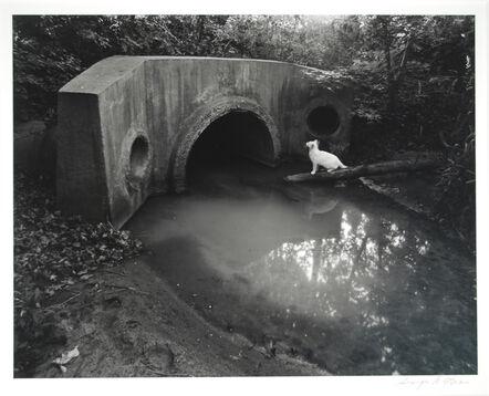 George Tice, 'White Cat Series, Iselin, NJ', 1980