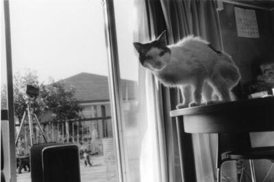 Nobuyoshi Araki, 'Sentimental Journey / Spring Journey', 2010