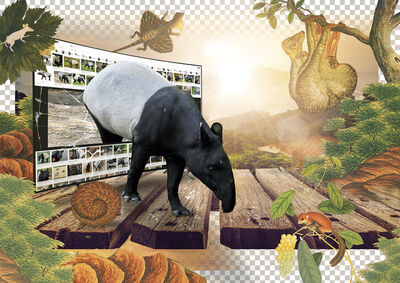 HSU Chia-Wei, 'The Adult Malayan Tapir is Surrounded by Mountains', 2019