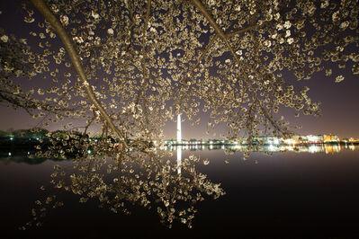 Frank Hallam Day, 'Cherry Blossoms #44', 2012