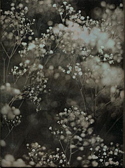 Jerry Spagnoli, 'Two Botanical Studies', 2001/2001