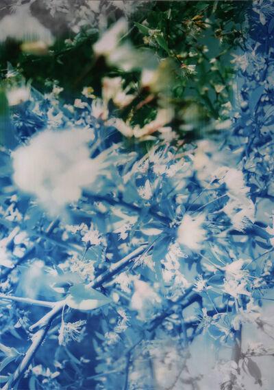 Han Lei, 'Flowers', 2015